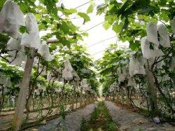 Рр Non-Woven для Bagging винограда, фрукты, Bagging банан мешок для защиты