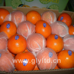 Nova cultura Primeiro Grau umbigo fresca Orange
