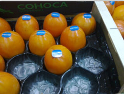 Echo-Freundlicher Frucht-Verpackungs-Behälter
