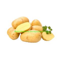 2020 Pommes de terre fraîches de Hollande en provenance de Chine