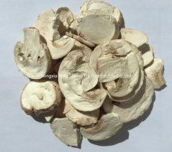 Gel bouton coupe de champignons séchés