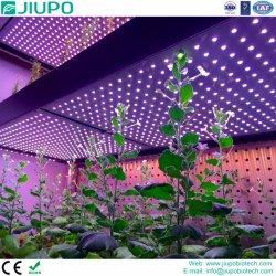 Четыре цвета LED роста растений лампа с общей интенсивности подачи