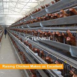 Gabbie di stenditura dell'uovo del pollo dell'azienda avicola da vendere