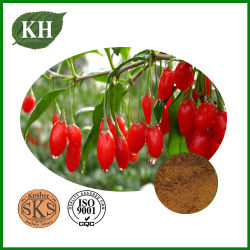 Oganic Wolfberry extrait pur et naturel des polysaccharides de 50%; poudre de Goji