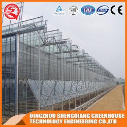 China Venlo Multi Span de cristal de la agricultura hidropónica de efecto invernadero de hortalizas y flores y el tomate/Granja/Jardín