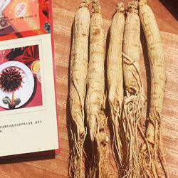 Uittreksel van de Ginsengen van SR het Aziatische/Panax Ginseng C. a. Mey.