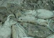 Ossos de peixe (1)