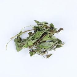 Free Sample tè alle erbe cinesi foglie di menta essiccate