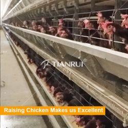 Bateria de Camada automática do melhor preço da gaiola de frango Avícola Equipamentos para venda