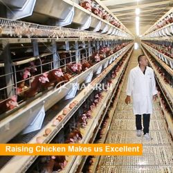 Tianrui Automatic Chicken Farm PliS Battery Cage System/ バッテリ層家禽ケージ