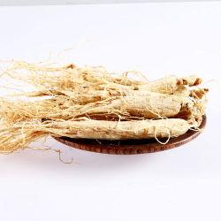 Raíces de ginseng de Panax ginseng silvestre Renshen