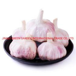الثوم الصينية عالية الجودة الثوم الطازجة المقشّرة 2021 نقي طازج ثوم بيضاء و حمراء للبيع