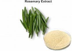 Natuurlijke 25% Ursolic Zure Rosemary Leaf Extract Powder voor Anti-oxyderend
