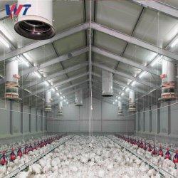 Новая конструкция стальной конструкции тесной клетке для домашней птицы дома с автоматической системой