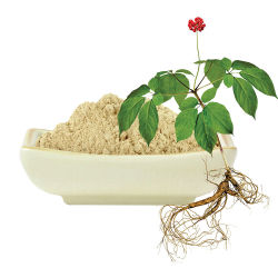 Extrato natural de raiz de Ginseng imune ao pó em alimentos funcionais