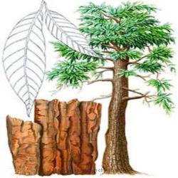 Los productos farmacéuticos Yohimbina de Corynanthe el 98% de árbol de Yohimbe Promover el Bienestar Sexual Masculina Fat-Burning admite hombres suplemento dietético