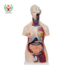 Sy-N018 인체 해부학 무성 흉상 모형 남성과 여성 PVC 인체