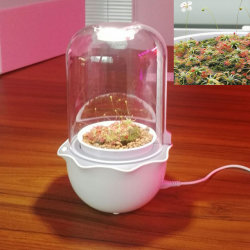 Smart succulentes Moss croître lumière LED de minuteur du semoir
