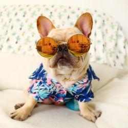 ハワイの夏の休日の設計ペット衣服犬の衣服の注文の子犬 犬は 2020 年を着る