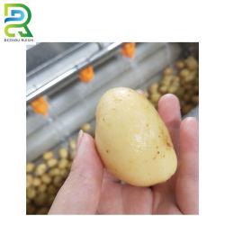 Pomme de terre efficace Peeler Electric Laver et peler le gingembre machine industrielle