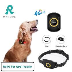 가장 인기 있는 IP67 방수 등급 미니 개인 PET 개 기기 스마트 GPS 추적기