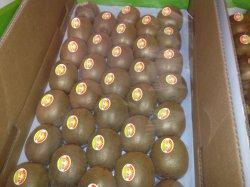 Frais pour la vente de fruits kiwi