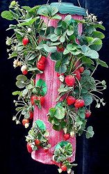 De Planter van de Aardbei van Turvy (TOT002)