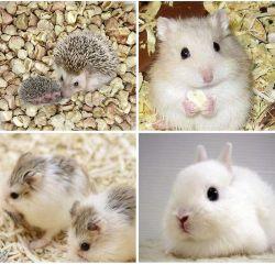 애완 동물 제품은 옥수수 옥수수 속 작은 애완 동물 햄스터 동물 침구를 말린다