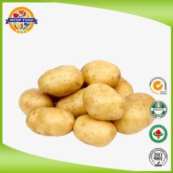 새로운 작물 좋은 품질을%s 가진 신선한 네덜란드 감자
