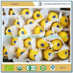 Nova cultura do fabrico de limão fresco de limão fresco
