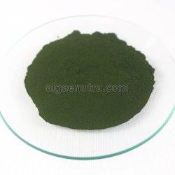 건강식을%s 녹색 순수한 증명된 클로렐라 분말 부피 원료