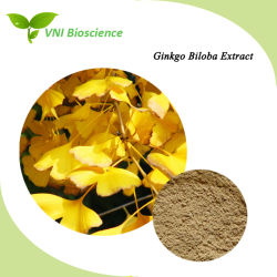 100% naturel ISO Kosher Halal extrait de plante Ginkgo Flavonglycosides Total Lactones terpènes extrait de feuille de ginkgo Biloba 24%/6%