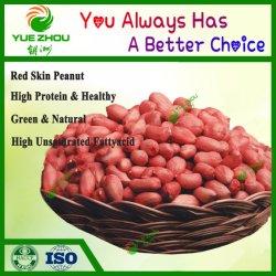 La nouvelle récolte le noyau d'arachide peau rouge avec une bonne qualité d'arachide