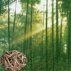 "Посева семян mao Чжу Чжун zi семена phyllostachys pubescens Мосо"" бамбука"