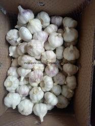 新しい穀物の新しい冷却の純粋で白いニンニクの製品