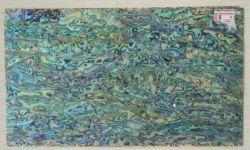 Paua/carte Shell dell'aliotide