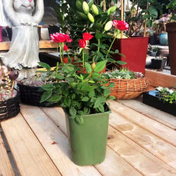 16 cm verde maceta de plástico duradero para sembradora Rosa Guardería Jardín balcón interior y exterior
