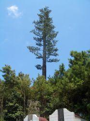 생체공학 통신 타워 단 하나 관 나무 탑