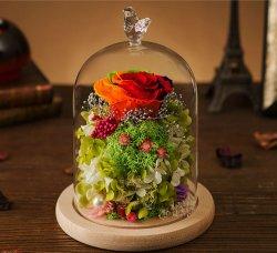 Il Rainbow di Kunming ha conservato il fiore fresco della Rosa del taglio in cupola di vetro
