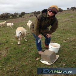 Da Mu cientista pura poço de sal de ovinos leiteiros da Alimentação do Bloco