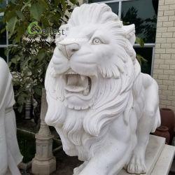 En el exterior de mármol blanco de tamaño de la vida enojado estatua de León, León Escultura, talla de León