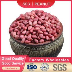 Noccioli di arachidi Red Skin 50/60 60/70 di prodotti caldi