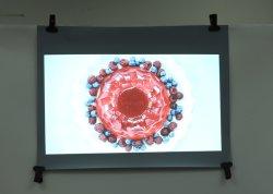 ハイコントラストの透過背面映写スクリーンのフィルム/ホログラフィックフィルム