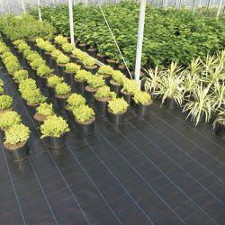 Barrière de mauvaises herbes, tissu de mauvaises herbes, chiffon anti herbe