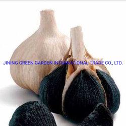 الثوم الأسود، صحي من الثوم الأسود المتعددي الثوم العضوي الطبيعي المخمر لصنع ملينان