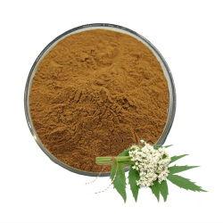 L'usine produit extrait de racine de valériane Valeriana officinalis Valériane extrait de l'huile de poudre