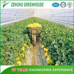 Usine de bonne qualité d'alimentation directes facilement installé Arch Green House pour Seedbreeding/Melons/fleurs la plantation