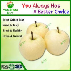 Chinesische goldene Birnen-frische Birnen-organische Birne mit preiswertem Preis
