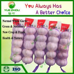 6.5 van het Grote Cm Knoflook van het Knoflook Purpere Witte met Goedkope die Prijs door China wordt gemaakt