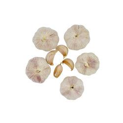 Frais de l'ail blanc pur au prix en vrac en usine